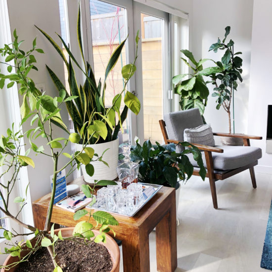 """alt=""""picture of beautiful plants and the bright living room at Chez Sealy PDX's Luxury Guesthouse in Portland Oregon"""""""